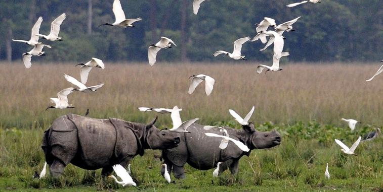 Essay on kaziranga national park