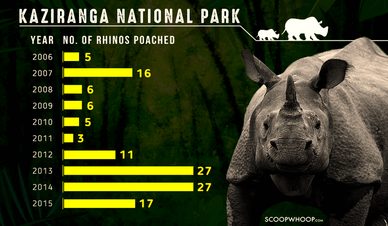 Rhino Poaching Deaths in Kaziranga National Park