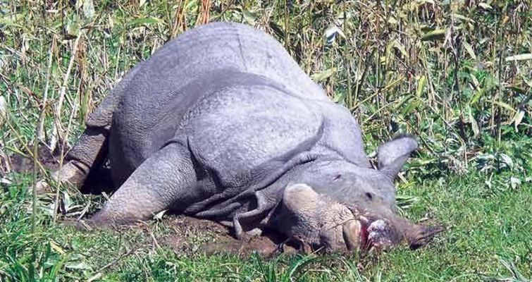 Rhino killed in Orang National Park