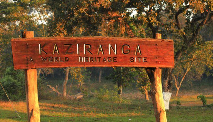 Kaziranga Park Assam
