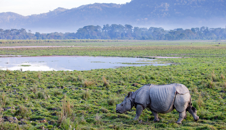 Decrease in Rhino Poaching Rate in Kaziranga National Park