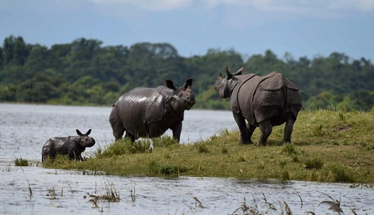 Kaziranga Mourns 3 Rhinos Deaths in 3 Days