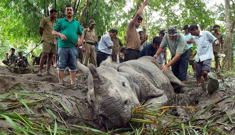 Poaching Incidents in Kaziranga 2017
