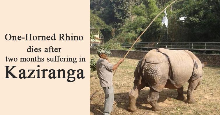 Rhino Dies in Kaziranga