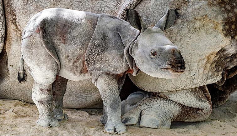 baby rhino miami zoo
