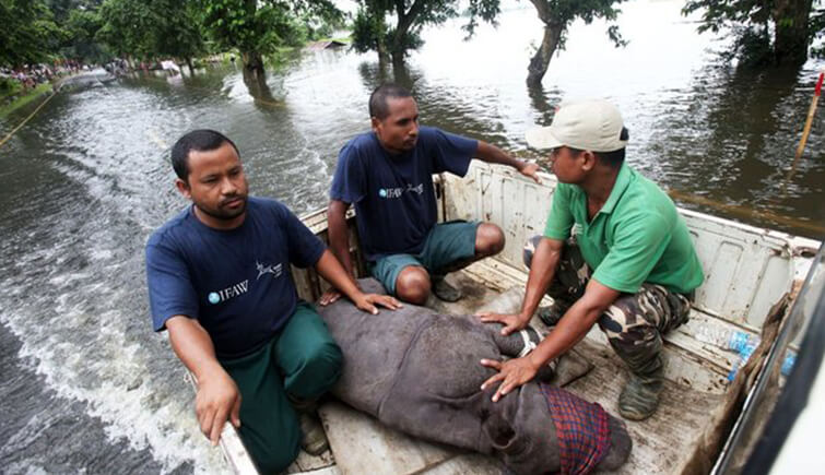 Baby Rhino Rescued From Kaziranga Flood