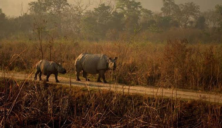 Rhino-in-Kaziranga-park