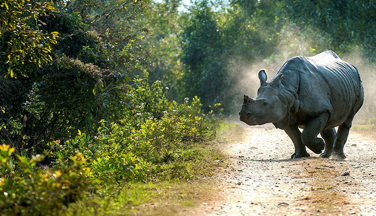 kaziranga national park amazing facts