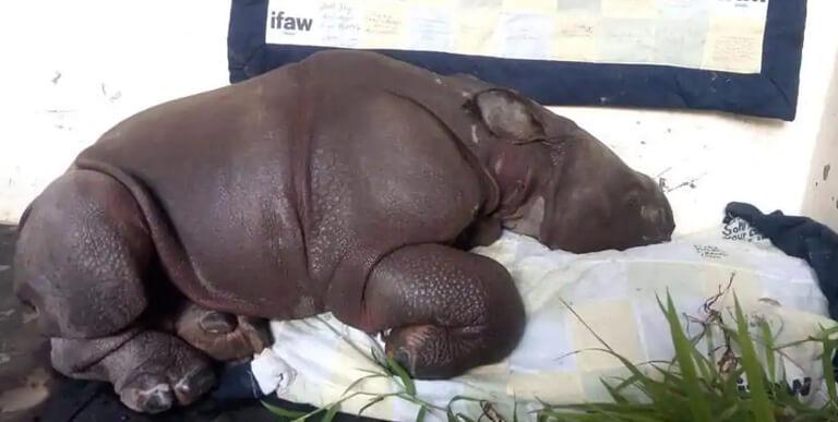 Baby Rhino Kaziranga