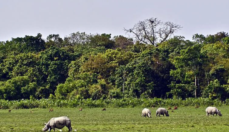Kaziranga National Park Forest