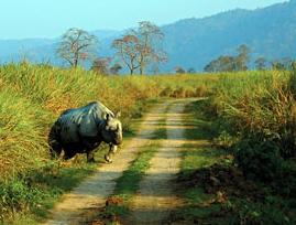 Wildlife In Kaziranga National Park Assam India