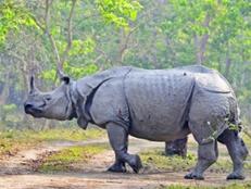 kaziranga-rhino-tour.jpg